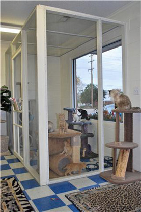 Size 550x415 cat boarding kennels