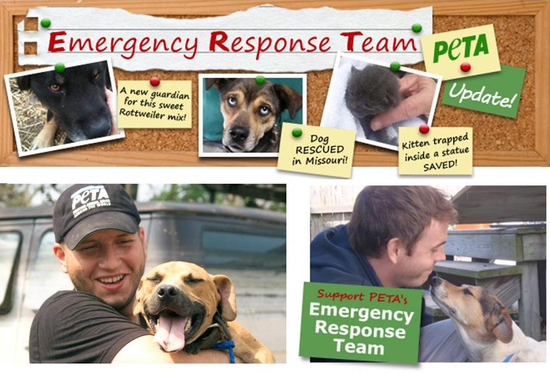 Size_550x415_emergency%20rescue%20fund