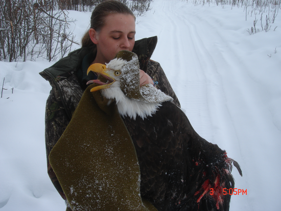 Size_550x415_injured%20eagle-12-19595%20012