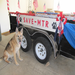 July 4th parade float with Jasmine, a 13 year old Shepherd rescue.