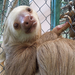 Sloth Save - Help Get Sloths Out Of Cages and Into Trees