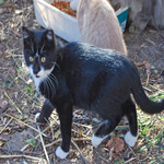 Feral Cats:  Trap/Neuter/Return Program