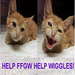 Thanks to you, Wiggles is walking--and running--with barely a trace of his spinal injury!