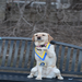 Therapy Dogs Comfort Boston Marathon Bombing Survivors