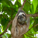 Sloth Save and Virtual Sloth Sanctuary Project