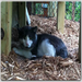 Moses - he was abandoned as a kitten and lived in the woods for several years. Now lives at the sanctuary, safe & loved!