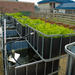 Aquaponics for Bless India Children's Home