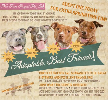 Size_550x415_adoptablebffs