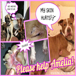Help Amelia Heal