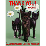 Please Support the Berkeley Humane Kittens!
