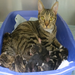 Mimi was left pregnant at a kill shelter--Mimi & her 7 surviving babies have all been adopted! Help FFGW help others!