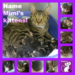 Sponsor Mimi's Kittens and You Get to Pick the Name!