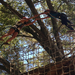 Awesome Ropes Courses at Camp Shalom with Interfaith Inventions thsi summer!