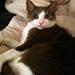 All My Catnip Toys - starring Jessie & Fay Fay for the Heartland Animals - A-cat-emy Award Nominees!