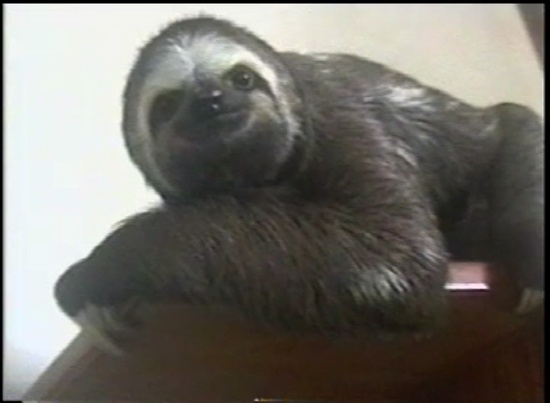 Size_550x415_sloth%20on%20shelve