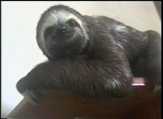 Size_550x415_sloth%20on%20shelve