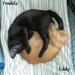 Freddy & Eddy, former ACS kittens, cuddling