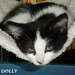 Poor little Dolly is growing up at the shelter. Help us keep her warm until she finds her furever home!