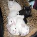 Former ACS kittens cuddling