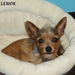 Little Lenox sleeping in his bed. He has since been adopted!