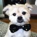 Hayden leading actor  in Doggie Houser AKC