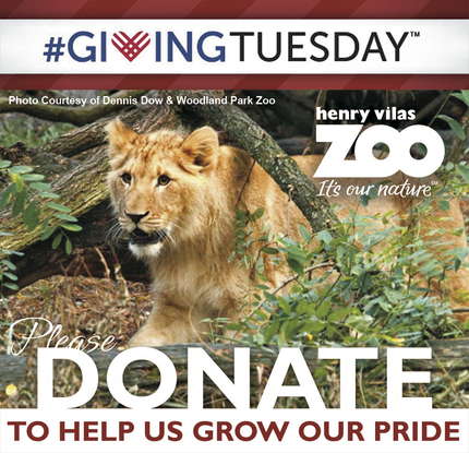 Size 550x415 giving tuesday lion2013