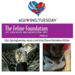 Giving Tuesday: Help Homeless Cats & Kittens