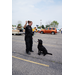 K9 Tiba - Highland Heights, KY