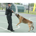 K9 Bax with partner