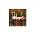 CSO Flamingos