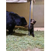 Luka, an Andean bear cub, born at the Zoo on January 3, 2013. Your donation helps support the care of all our animals.