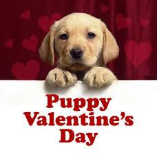 Size_550x415_valentine%20puppy