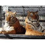 In-Sync Exotics - Spectacular Spayday Special Fundraiser!