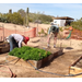 Plant your own garden at the Yuma Conservation Garden!