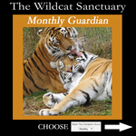 Wildcat Sanctuary Monthly Support!