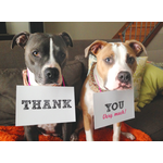 Stella & Winnie fundraise for Save-a-Bull Rescue