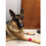 4 Paws Medical Fund : HELP SAVE GABRIEL