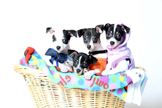 Size 550x415 gadgets pups