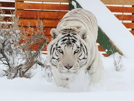 Size_550x415_christopher-snow-horiz