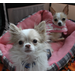 Size_75x75_gizmo_and_bella_blurry