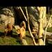 Animal Enrichment Basics with Zoo Director, Lee Ehmke