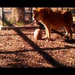 Bashful 21-year old Sabu Playing with His Favorite Ball!