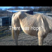 Video of Marigold when she arrived