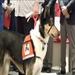 Canine for Combat Veterans