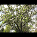 Baltimore Orchard Project
