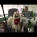 North Star Therapy Animals Volunteer Teams Featured in P