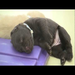 The above video shows several litters at our breeding station. The photos below show Molly and Hettie's pups!