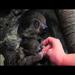 Your Moment of Zen - Minnesota Zoo Babies!