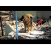 Say NO To Dog Meat - Mimi's Half Marathon