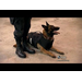 ABC News with Diane Sawyer - Vested Interest In K9s, Inc.